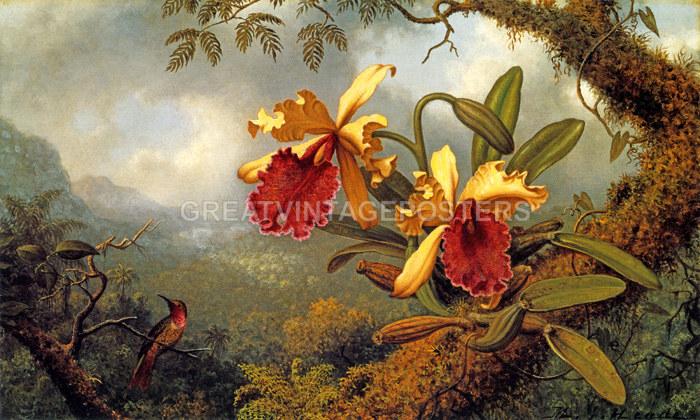 Hummingbirds Jungle Passionflower vines by Martin Heade